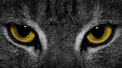 Tiger Style photo by Jordan A. W