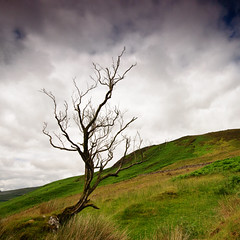 The Withered Tree of Knocknacloghoge {Explored} photo by Rusé