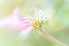 Brightness photo by littlekiss☆