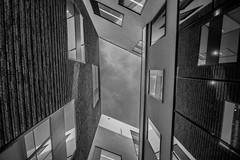 Looking up photo by McQuaide Photography