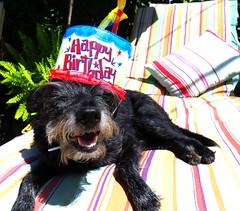 It's the Birthday Desi! photo by Renee Rendler-Kaplan