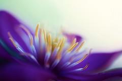 Inner Beauty photo by j man.