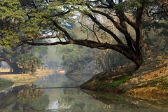 Howrah Botanical Garden photo by soumen19xx