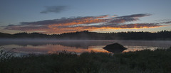 Beaver greets the dawn photo by Jeff Mitton