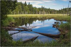 Hugginin Trail Reflection photo by dtredinnick13