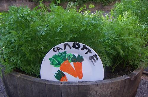 assiette carotte