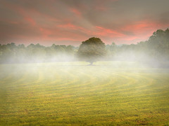 Misty Morning (explored) photo by Alan10eden