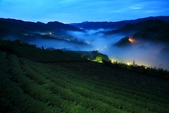 闇雲勦 ~ Dawn, fog and glaze Light of Tea Garden @ 坪林 Pinglin, Taipei  ~ photo by PS兔~兔兔兔~