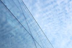 Something blue photo by Jani M