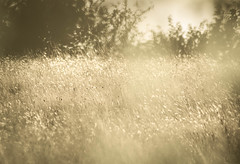 Summer Evening Breeze (Explored) photo by 1963chris
