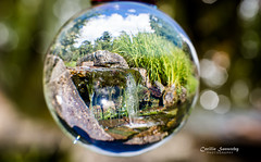 A small part of Oslo Botanical Garden captured in a glass ball photo by nemi1968