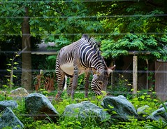 Smithsonian National Zoological Park Washington, DC
