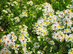Wildflowers photo by Larry the Biker