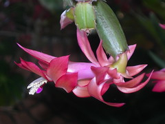 Cactus Flower photo by Chrissie2003