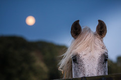 supermoon in the year of the horse photo by jkravitz