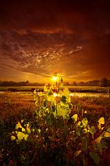 Summer Dreams Drifting Away photo by Phil~Koch