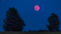 "August 2014 ""super moon"" photo by loco's photos"