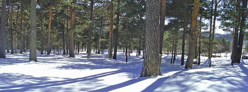Panoramica bosque