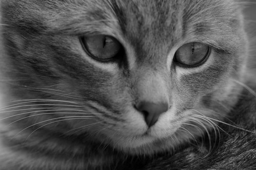 Ojos, eyes, ollos.