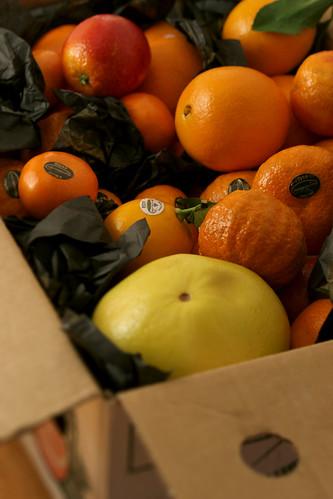 citrus boxed