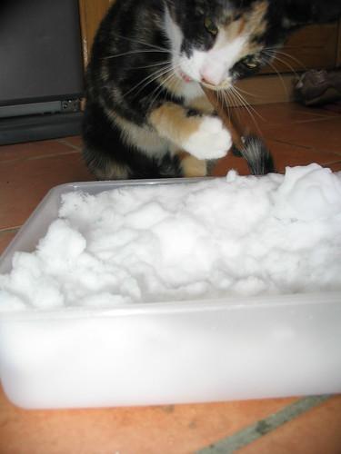 'Mmm, treats!'