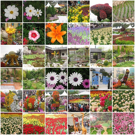 Flowers Thumbnails
