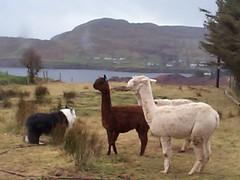 Dougal, Seacláid, Uachtar, Cloyd