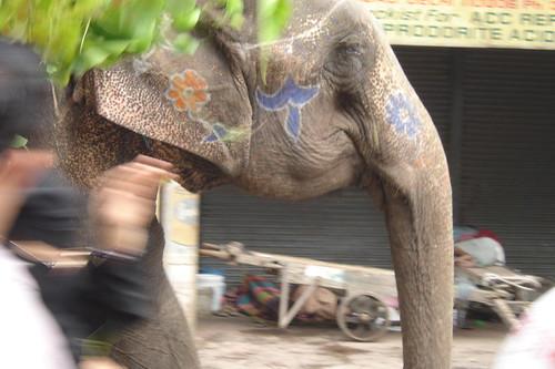 Elephant on Holi