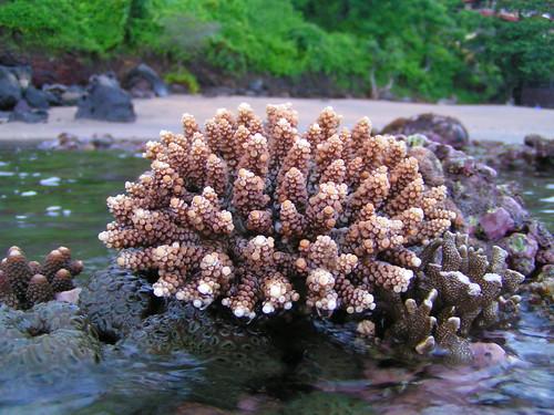 coralgarden (8)