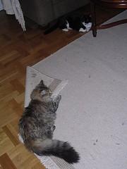 Katthår liten