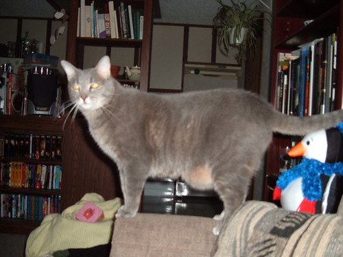 Mephisto Cat