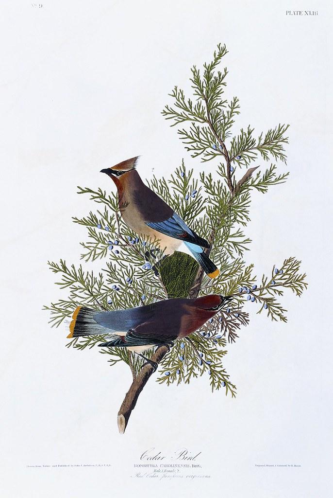 Beutiful Amazing Hot Wallpapers John James Audubon 39 S