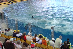 Killer Whale show - Splash Zone
