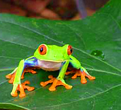 treefrog2.jpg