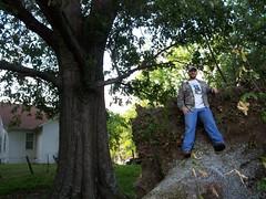 gumby tree