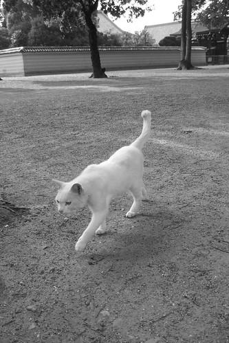 白黒写真の白猫