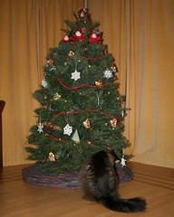 sasha's tree