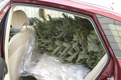 Christmas tree in a Prius