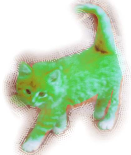 Chartreuse Cat