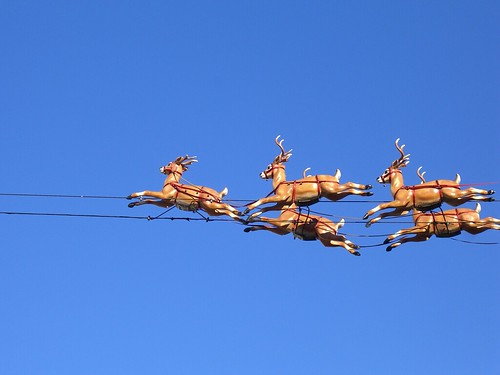 Flying reindeer