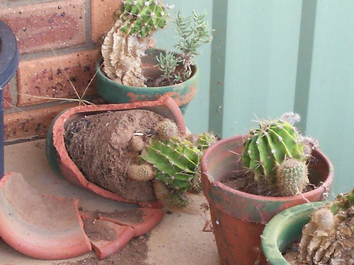 Cactus on the veranda