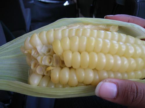 giant corn