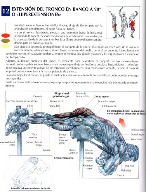 Ejercicios Espalda : Fotos. Musculación y pesas.