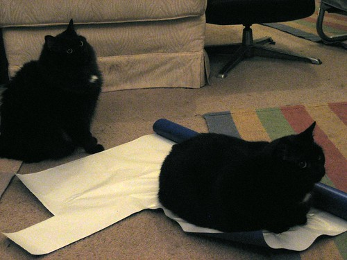 Cats helping us wrap gifts