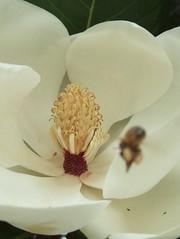 花と虫 その二