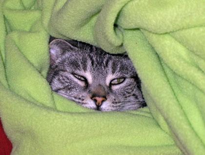 Kitty_wrap