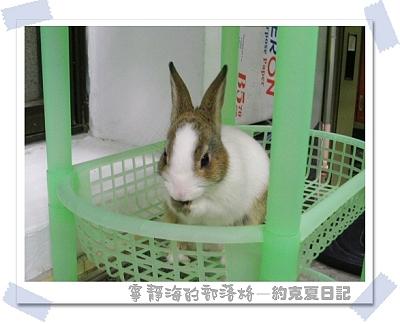 約克夏日記_20060103_小松鼠