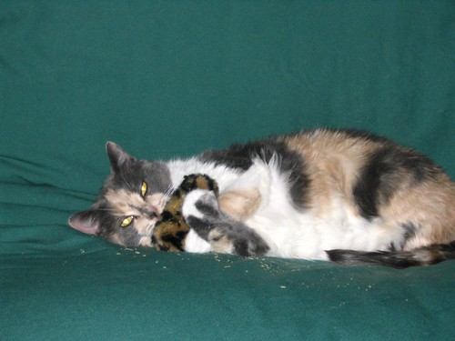 Patches with catnip toy