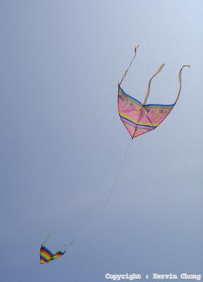 Kites03