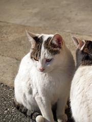 Cat 060122 #04